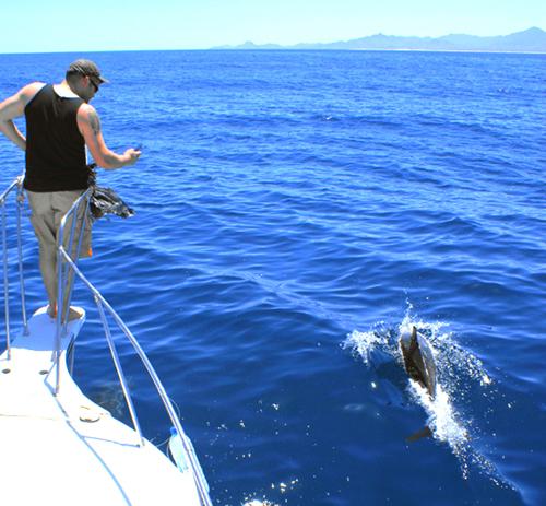 Dolphin_Shot